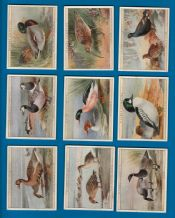 Cigarette cards set 1928 Game birds & wild fowl,